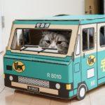 猫が長生きする為の食べ物(フード)や習慣は?病気にならない秘訣は?