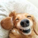 犬が食べ物の好き嫌いを激しくする時の原因は?対処法はあるの?